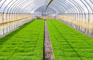 とうごうシリーズの栽培方法のイメージ